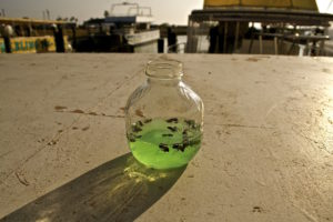Daniel Falquez Photography - Bee Jar